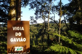Vigia do Gavião