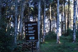Mini Floresta Negra